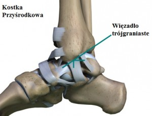 ankle_arthroscopy_ligaments